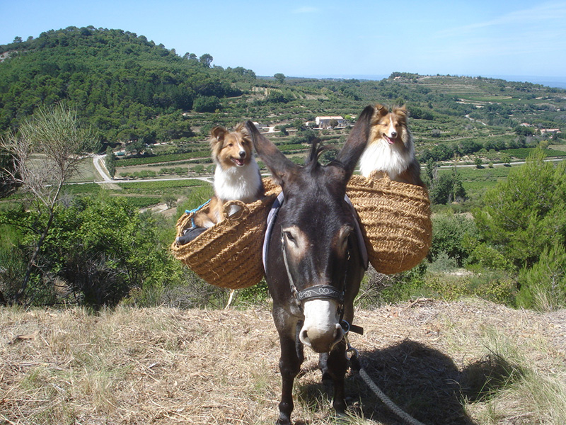 venasqu'ânes